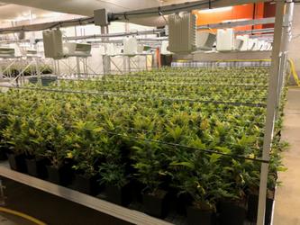 4200 Pflanzen in einer Halle