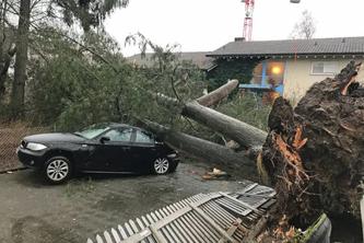 Von einem umgestürzten Baum getroffenes Auto in Dagmersellen (Bildquelle: Luzerner Polizei)