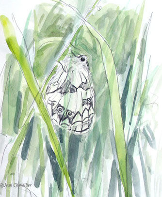 Demi-deuil, aquarelle Jean Chevallier