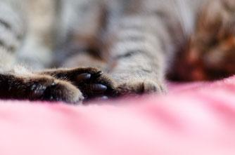 猫 寝ているネコ