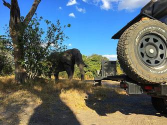 Elefant in der Kinovorführung