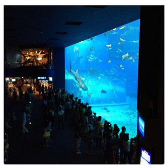 念願の水族館