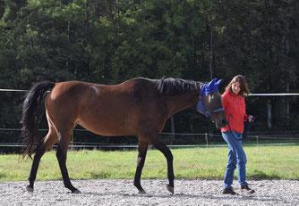 Reinschnuppern, wie pferdegestütztes Coaching geht_horse-feedback.ch