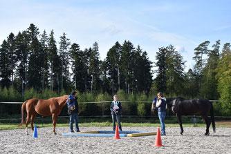 Schnuppercoaching mit Pferden live erleben mit dem horse-coaching-team.ch