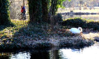 Frühlingsgefühle. Auf der Luiseninsel, Naturpark im Schlossgarten Charlottenburg. Foto: Helga Karl März 2011