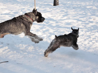 Harley and Alf in the park, Feb. 2015, Moscow Russia