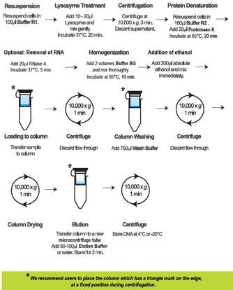 Extraktion und Aufreinigung von bakterieller DNA