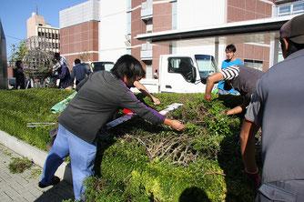 若手植木職人たちが手際よくメンテナンス