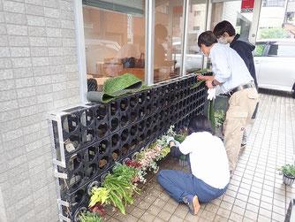 壁面緑化システムに植栽