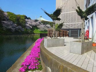 千代田区の鳥「白鳥」のトピアリー・植栽から3年