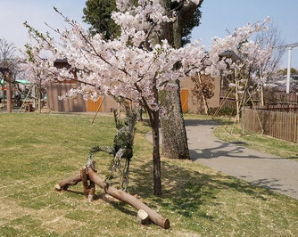 満開の桜とシロテテナガザルのトピアリー