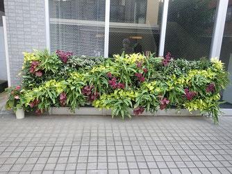 落ち着いたミニ壁面緑化