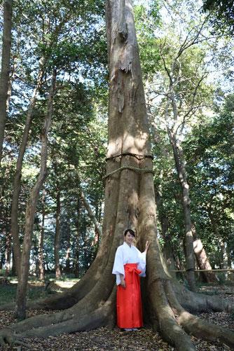③-1-1「美人の木(告白の木)」
