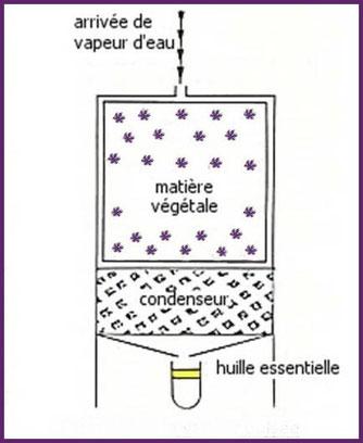 Extraction à la vapeur pulsée