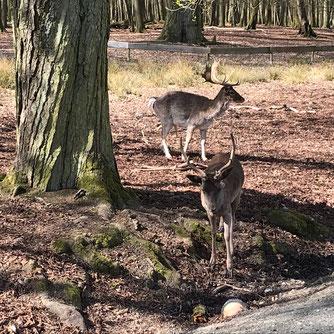Wisente im Wildpark Weilburg                                       Foto: D. Menke