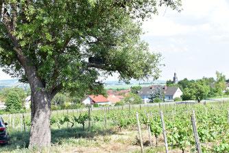 Niströhre auf einem Birnbaum im Kreis Bad Kreuznach