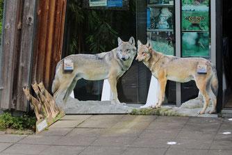 Foto: Rainer Hauenschild: Wolfsabdruck