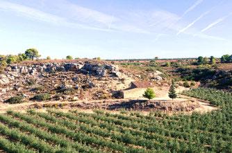 Paraje Vall d´Algés: variedades arbequina, empeltre y tosca