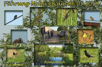 Fotos und Collage: NABU S. Beyer