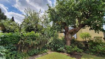 Hinter einem alten Kirschbaum verschwindet das Nachbarhaus