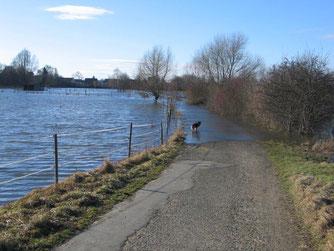 Hochwasser von Februar 2011 im LSG Nördliche Okerauw in Wolfenbüttel.