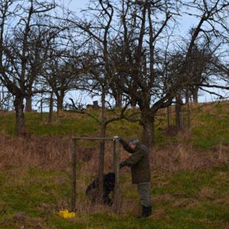 Klaus-Dieter Bartels und Rolf Reichelt  reparieren den Verbisschutz für einen jungen Apfelbaum.     Foto: Cornelia Schilling