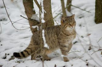 Foto: BUND Wildkatzensprung/T. Stephan