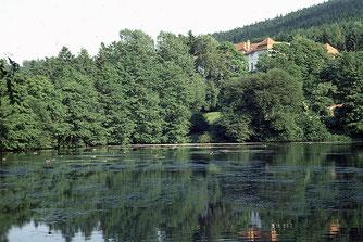 Einer der ersten Amphibienschutzzäune in Mittelthüringen stand am Ritzebühler Teich in Ilmenau. Foto: NABU Ilmkreis