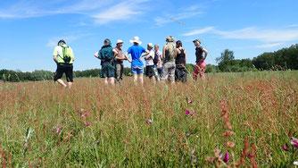 Welche besonderen Pflanzen wachsen auf dem Magerrasen? Foto: ÖNSA/N. Feige