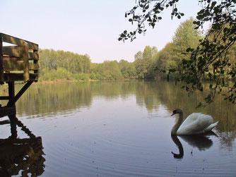 Bruchgrabensee - Foto: NABU Eppingen-Elsenz