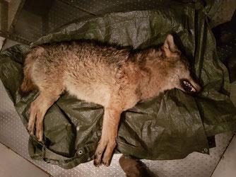 Das geborgene Tier © F. Preusse