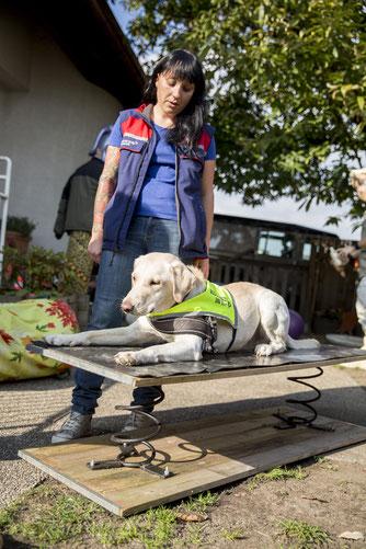 Hundeschule, Diabetikerwarnhunde, Signalhunde,