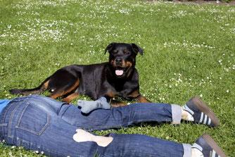 Second Hound, Kingy Rybinska, berlin mit hund, Melanie Knies, Hundeabenteuer, Hundekrimi, Hundewanderung, Hundeschule