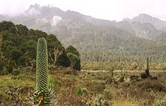 Tipico panorama della Rift Valley.