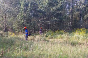 Freischneider im Einsatz auf der Waldlichtung