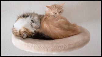 Wandliegemulde für große und schwere Katzen mit kuschelig weichem Webpelzbezug