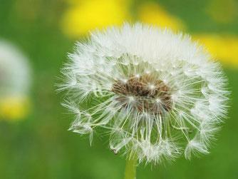 Naturheilkunde, Homöopathie & Heilpflanzen bei Kinderwunsch, Kinderwunschbehandlung Berlin