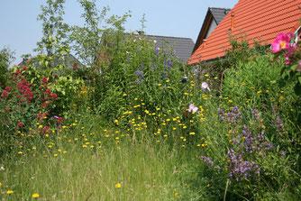Naturgarten (Foto: NABU)