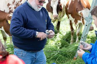 Peter Josef Müller bei der Bringung eines jungen Steinkauzes  Foto: Edgar Mertens