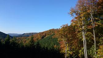 Symbolfoto Wald NABU Olpe