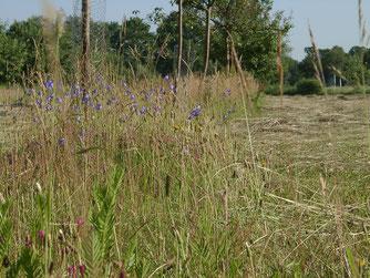 Gezieltes Mahdmanagement kann die Artenvielfalt fördern