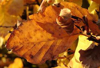 Wir plädieren dafür, ein wenig von den wundersamen Formen und Farben des Herbstes in die ansonsten recht kahle Winterzeit hinüberzuretten!