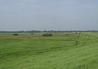 Blick in die Bornhorster Wiesen - eines der NABU-Grundstücke