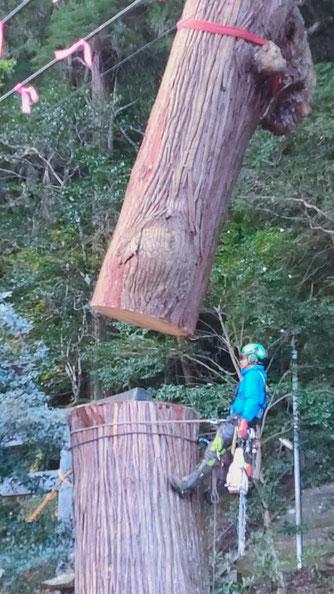 九州 熊本 枝打ち 支障木 特殊伐採
