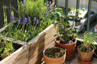 Frühlingsangebot für Insekten auf dem Balkon, Foto: Eric Neuling