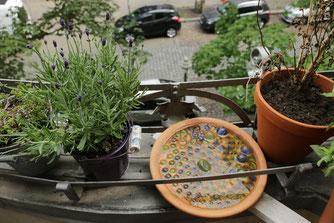 Nektar- und Wassertankstellen auf dem Balkon, Foto: Melanie Konrad