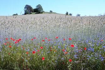 Eine naturschonende Landwirtschaft hat viele Vorteile. - Foto: bikegreen.de/Michael Stark