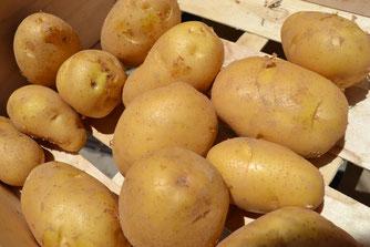 Pomme de terre    Variété: Monalisa  Mode de culture: Agriculture Biologique