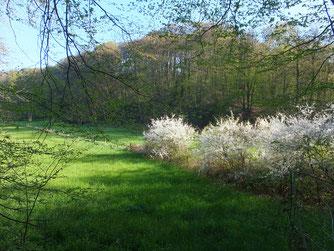 Frühling im Neandertal, H.Willmes