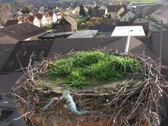 Das Storchennest – noch mit den verbauten Kunststoffseilen (Foto: Tanja Frischgesell)